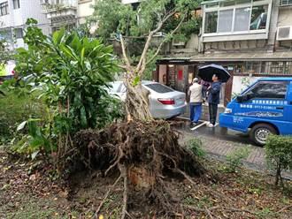 北市公園路樹突倒塌 波及民宅及2輛車