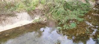 獨居翁疑捕蝦蟹 躺偏僻河道離奇身亡