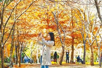 秋遊賞楓旅遊攻略 加保旅平險玩得更安心