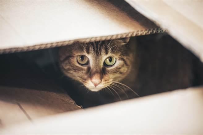 國外動保團體日前接獲民眾通報,前往救援一隻遭棄養的小貓咪。(示意圖/達志影像)