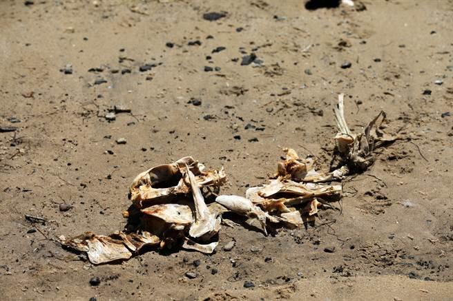 男子在海邊撿到疑似「美人魚」的骨骸,但考古學家卻認為可能是山羊或綿羊。(示意圖/達志影像)