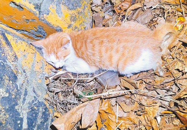 台南邱姓男子昨日凌晨到台南市楠西區營救貓咪,回程途中不慎自撞路橋護欄,轎車起火燃燒,他逃生不及身亡,貓咪則逃過一劫,蜷縮路旁。(讀者提供/莊曜聰台南傳真)