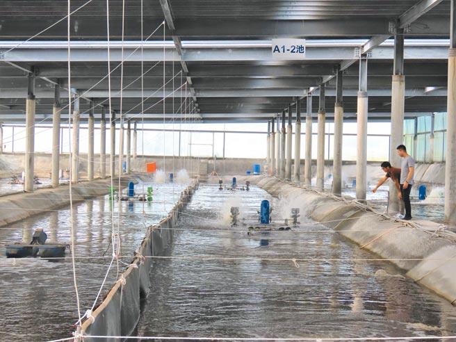 经济部与农委会规画设置渔电共生先行区,第一阶段在11月16日公告实施,台南市就有1750公顷,昨日南市府经发局也邀集渔民、能源业者与会,针对渔电共生相关法令做出说明。(庄曜聪摄)