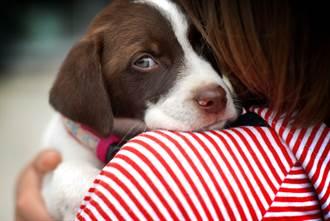 愛犬在家被偷走 狗賊囂張嗆飼主:誰叫你沒顧好