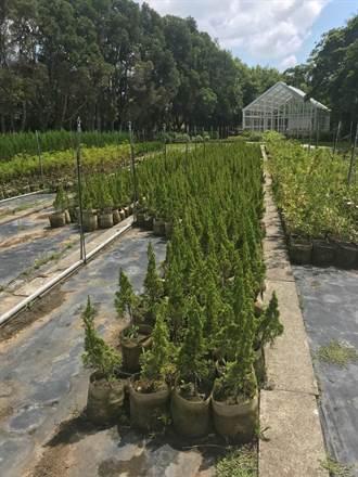 桃市推動造林計畫 今年首度發布植栽指南