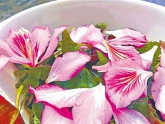 美景吃下肚 洋紫荊花有毒嗎?