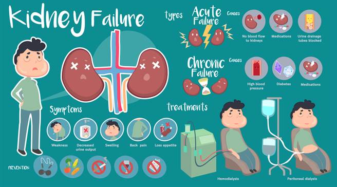逆轉腎臟衰退14方法,養生必知。(圖/常春月刊提供)