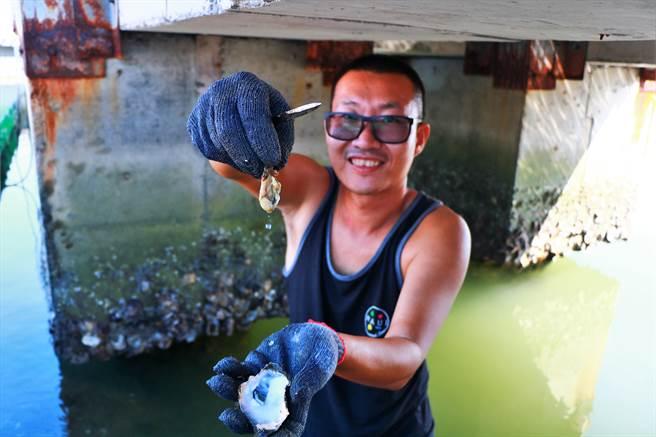 近年國旅型態大改變,深度旅遊愈來愈夯,大鵬灣潮口平台的水上業者也跟進轉型推出「採蚵」體驗行程。(謝佳潾攝)