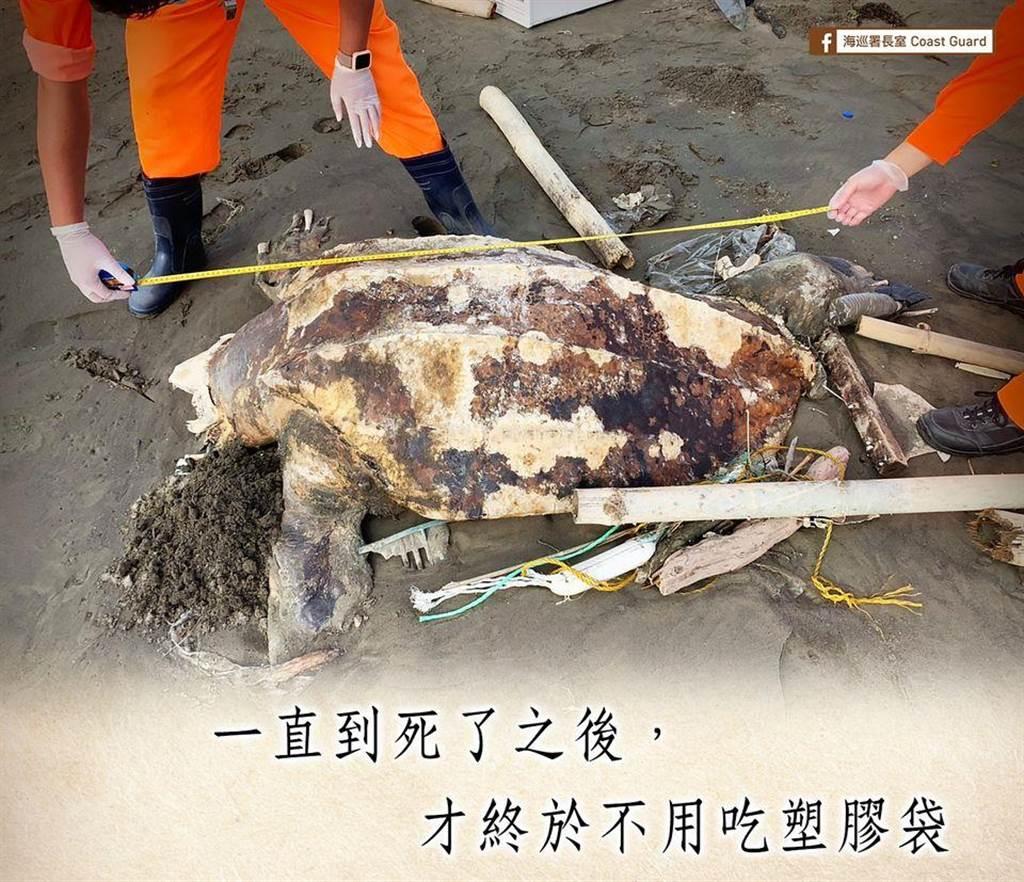 雲林岸際1日發現一隻「世界最大海龜」—革龜陳屍岸上。「海巡署長室」無奈表示,「一直到死後才終於不用吃塑膠袋。」
