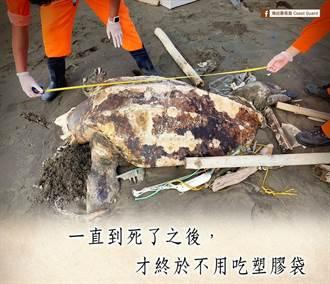 世界最大海龜慘死雲林 身邊堆滿塑膠垃圾引鼻酸