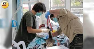讓牠回家3/輸液開刀救不回麝香貓 醫療團隊連悲傷的時間都沒有