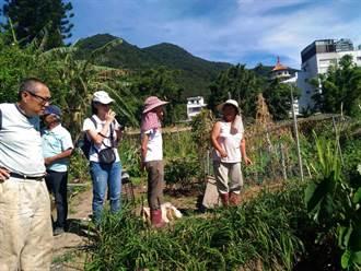 淡水農友自製天然驅蟲農藥和肥料  食用醋、八角、茴香、米糠派上用場