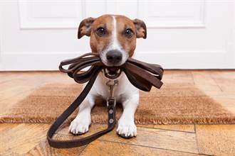 租屋處養狗 樓下鄰居狂抱怨「感覺頭上一直有狗」 飼主傻眼
