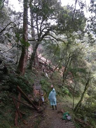 連日降雨 拉拉山神木區步道無法通行