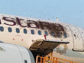 印度客機遇蜂災 成千上萬蜜蜂趴滿飛機 導致航班大亂