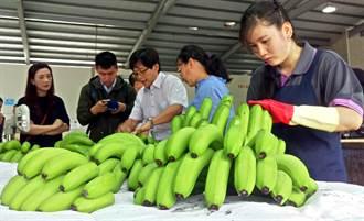 為防蕉賤傷農 屏縣府補助蕉農參加收入保險