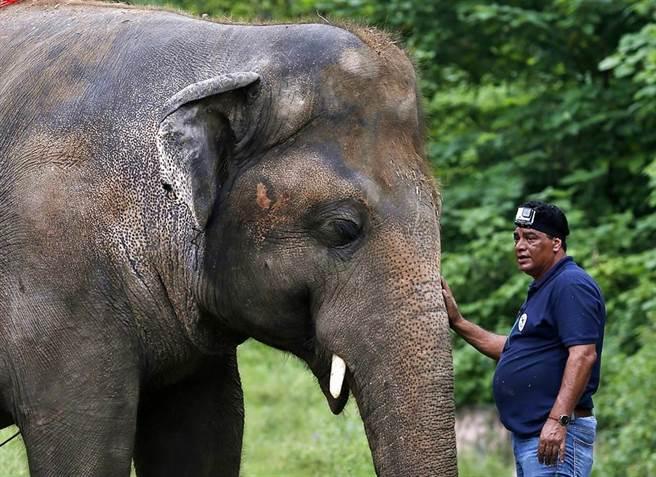 「世上最孤獨的大象」卡萬(Kaavan)看著同伴相繼過世,最終只剩下牠一隻,由於過於孤單,甚至出現頭撞牆的自殘狀況。(圖/美聯社)