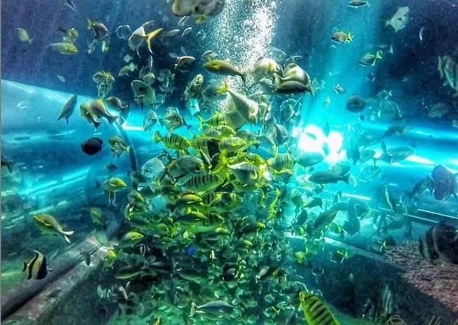 高雄海洋館帶領民眾感受海洋深不可測的奇幻美麗。(屏東海生館提供/謝佳潾屏東傳真)