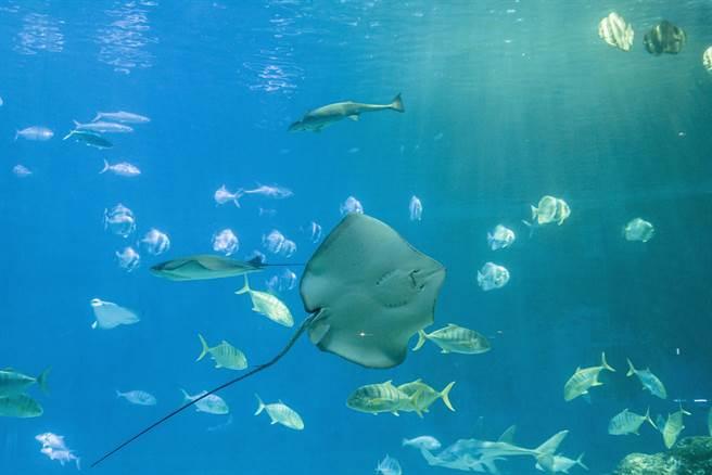 高雄海洋館將開展民眾對於海洋更多的想像及溝通。(屏東海生館提供/謝佳潾屏東傳真)
