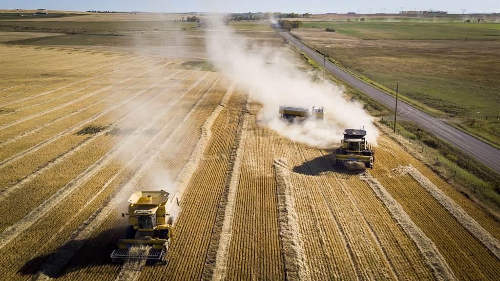 澳洲小麦出口商宣布,由于近来澳陆关系低盪,考量政治风险过高而决定退出大陆市场。(图/美联社)