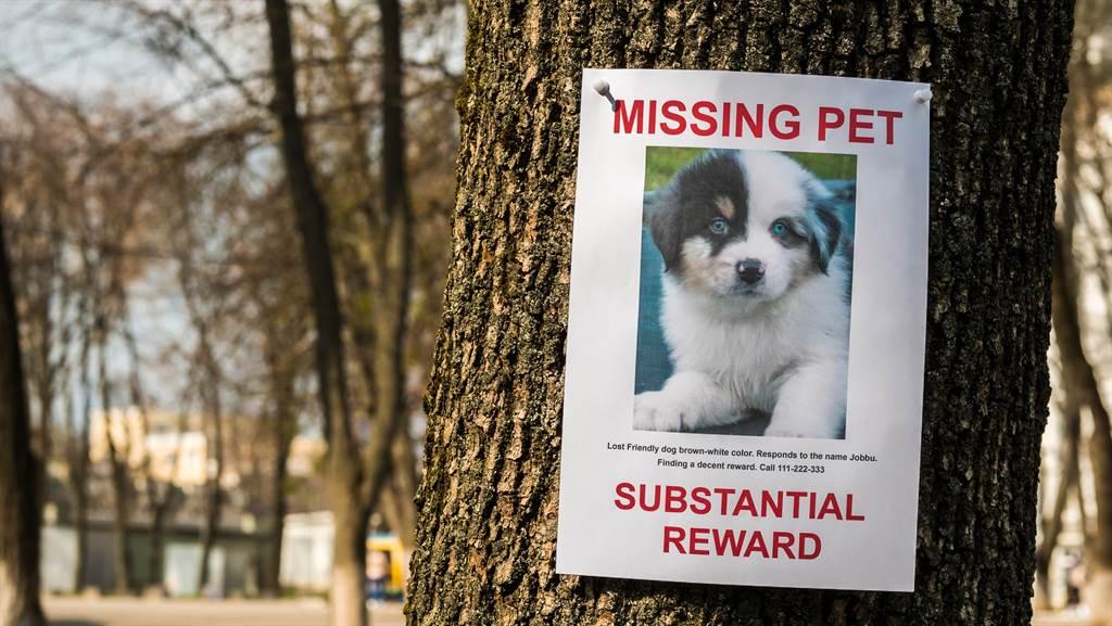 好心人撿到走失的狗,便交給社區保全照顧,並手繪畫像貼出認領文,還嫌狗長的很潦草,讓許多人看得霧煞煞。(示意圖/達志影像)