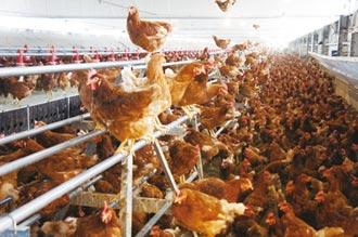 科學家新視野-缺水對於蛋雞產業的影響