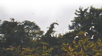 三角鎮福隆泵站成百鳥之家
