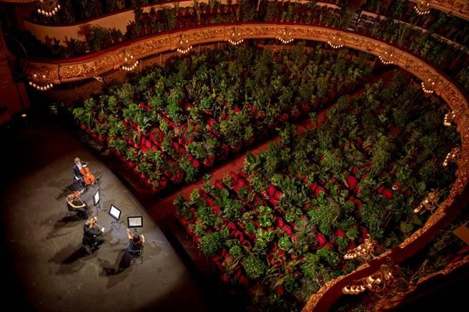 弦樂四重奏樂團「UceLi Quartet」6月22日在巴塞隆納利塞奧大劇院(Gran Teatre del Liceu)彩排。(圖/美聯社)