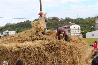 失傳25年 公館重現經典農事技藝「堆稈棚」