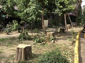 高雄果貿社區樹木「腰斬」 護樹團盼政府跳出來