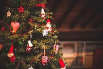 聖誕樹多出無尾熊玩偶好逼真 屋主湊近看秒被瞪嚇傻