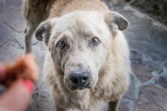 8個月大流浪狗被拋棄3次好無助 堅持相信人露燦笑網淚崩