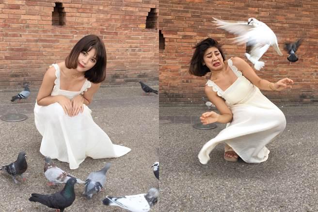 與鴿子拍照的「理想VS.現實」 (圖/ Vienna推特)