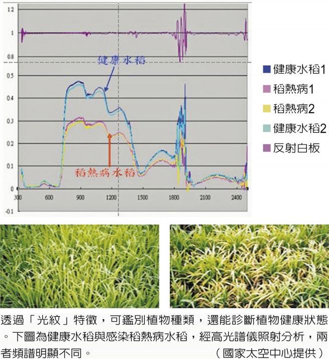 透過「光紋」特徵,可鑑別植物種類,還能診斷植物健康狀態。下圖為健康水稻與感染稻熱病水稻,經高光譜儀照射分析,兩者頻譜明顯不同。(國家太空中心提供)