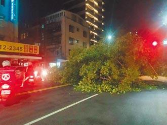 16人顧8.8萬棵 樹倒國賠北市第一