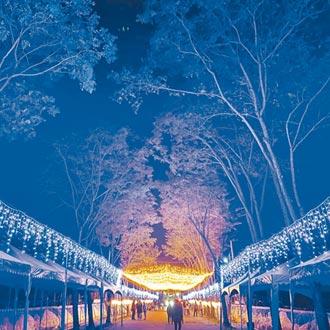 金崙大道耶誕燈海 美翻台東