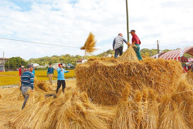 公館鄉農會5日重現經典農村文化「堆稈棚」。(巫靜婷攝)