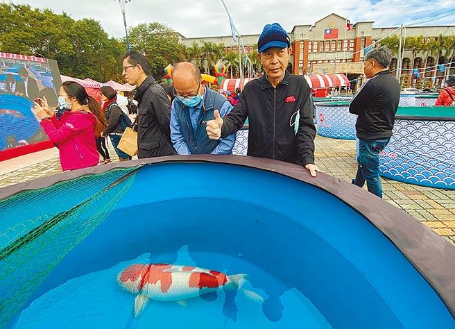 楊裕豐飼養的「紅白」錦鯉,在2020國際錦鯉品評會榮獲「全體總冠軍」,他也高興的比「讚!」(羅浚濱攝)