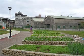 樹林三龍里綠家園啟用 廢棄雜物堆變種菜園地