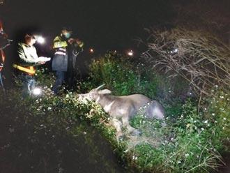 台鐵添3意外 巨石落軌...撞死牛