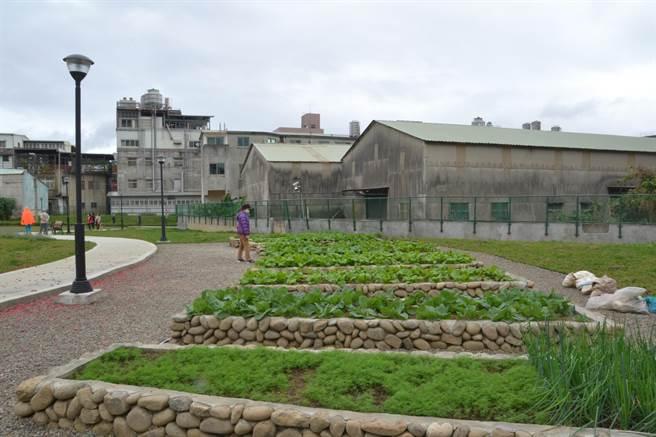 樹林三俊街有一塊1500坪的國有地,但因長期未整理相當髒亂,經在地里長、民代爭取後,成功將此地改造成綠家園。(記者蔡雯如攝)