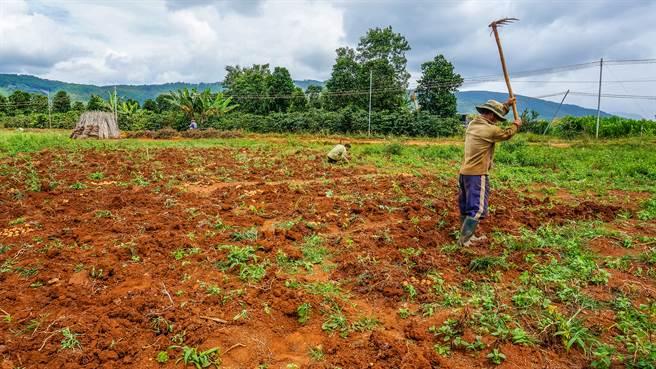 印度一名農夫花76元租地,意外挖到價值千萬的寶藏。(示意圖/達志影像)