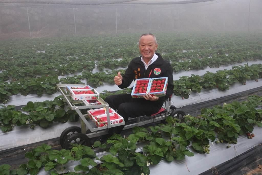 苗栗縣長徐耀昌7日到新美休閒農場,體驗乘坐草莓車採草莓,大力宣傳草莓觀光。(巫靜婷攝)