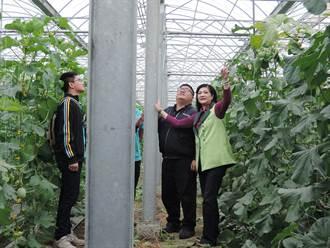 搭建溫網室被要求附建照 嘉縣農民氣跳腳