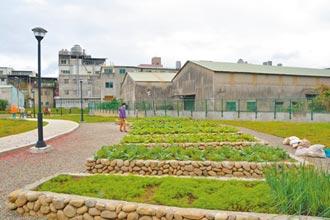 樹林三龍里 雜物堆變綠家園