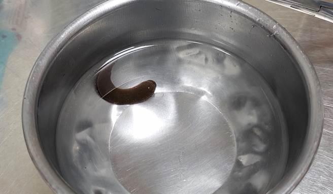台灣動物緊急救援小組志工為浪浪治療鼻腔,圖為取出的水蛭。(台灣動物緊急救援小組提供/林瑞益高雄傳真)