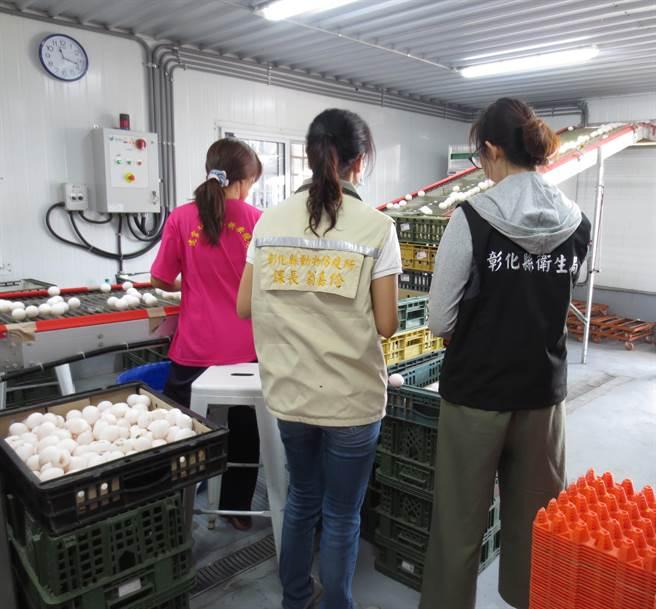 全國雞蛋每2顆有1顆來自彰化縣,彰化縣政府整合衛生局與農業處,輔導洗選蛋場、液蛋廠建立安全的雞蛋產業鏈。(彰化縣政府提供/謝瓊雲彰化傳真)