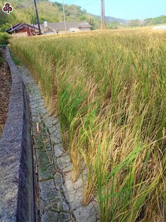 全台降甘霖 農水署:桃園有機會不用全面停灌