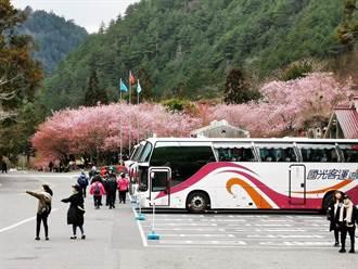武陵櫻花季車輛通行證 明年1/12開放申請