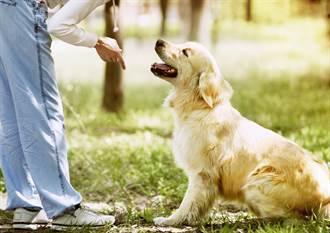 狗到底聽不聽得懂人話?實驗結果出爐飼主崩潰了